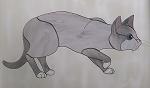 Benjamin the Curious Cat